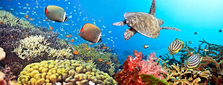 diving-phuket-7