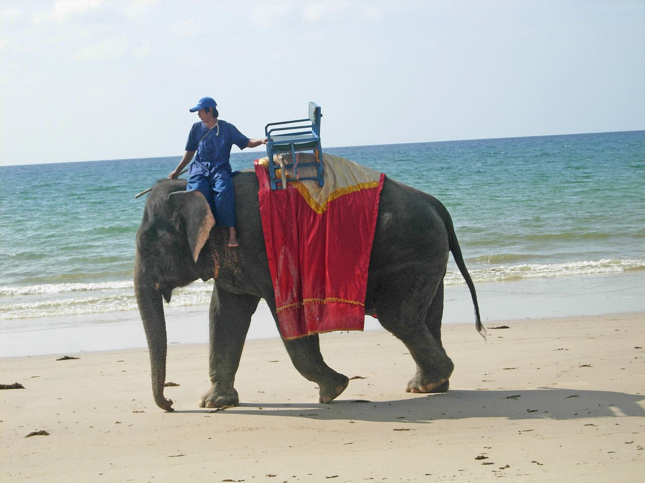 Animals to see on your sailing holidays in Thailand