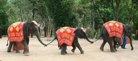 Elephant Rides Phuket