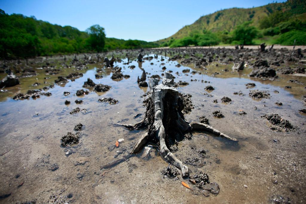 Mangrove loss