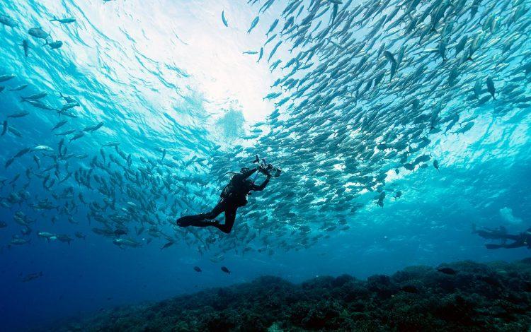 Philippines_Tubbataha Reefs
